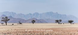Savannah in Namib Naukluft National Park, Namibia