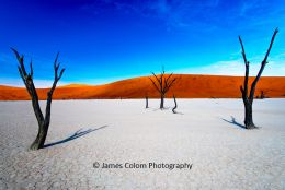 Camel thorn trees at Deadvlei, oversaturated, Namibia