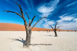 Camel Thorn Trees at Deadvlei, Sossussvlei, Namibia