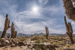 Cactus at Pucara de Tilcara, Jujuy, Argentina