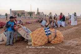 Bedouin with camel and the Al Marmoom racing track, outside Dubai, UAE