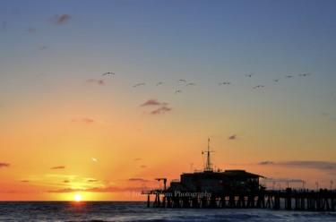 Birds over Santa Monica Pier at Sunset, California, USA