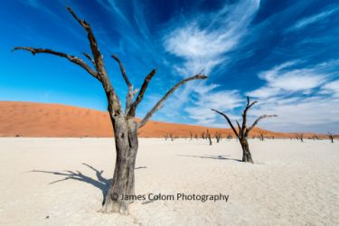 Camel Thorn Trees at Deadvlei, Sossussvlei, Namibia