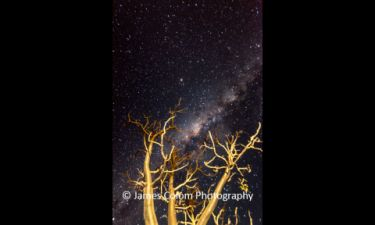Milky Way behind Baobab Trees in Namibia