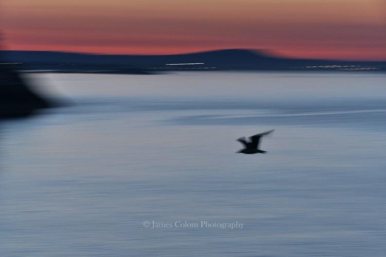 Bird at Sunset, Majorca
