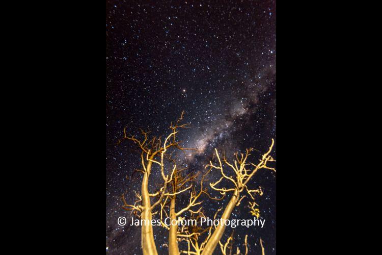 Milky Way behind Baobab Trees in Namibia