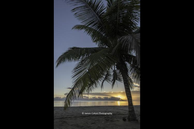 Sunrise under a palm tree at Hopkins