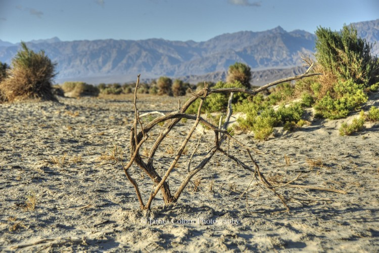 Death Valley: Plant on Mesquite Sand Dunes