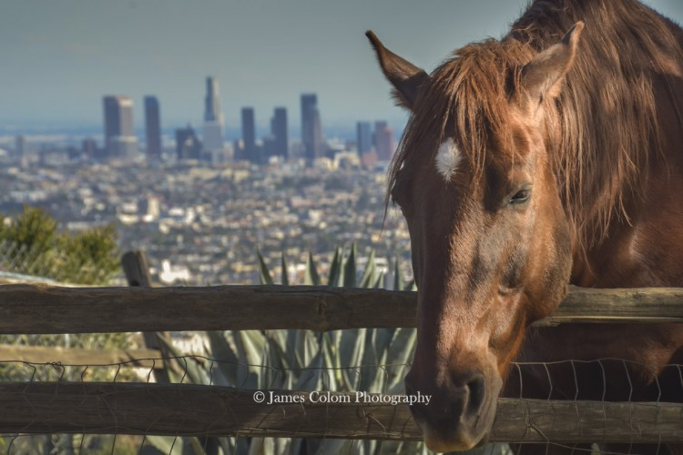 Horse in the Hollywood Hills