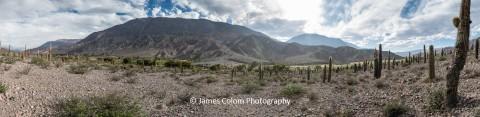 Valley of Cactus, Ruta 51, Salta, Argentina
