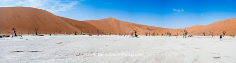 Panorama of Deadvlei at Sossusvlei in the Namib-Naukluft National Park, Namibia, Africa